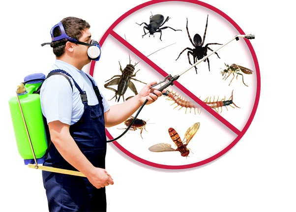 24 Hour Exterminators Near Me